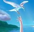 我爱小海鸥