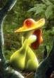 采姑娘地小蘑菇