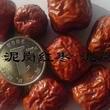 泥岗红枣1